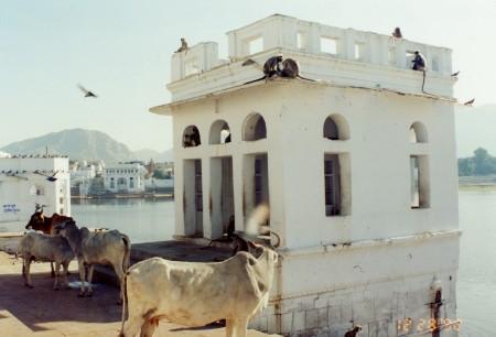 Pushkar_7v