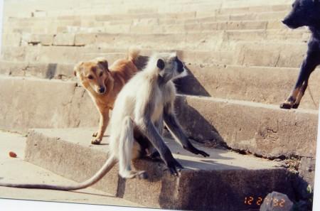 Pushkar_7
